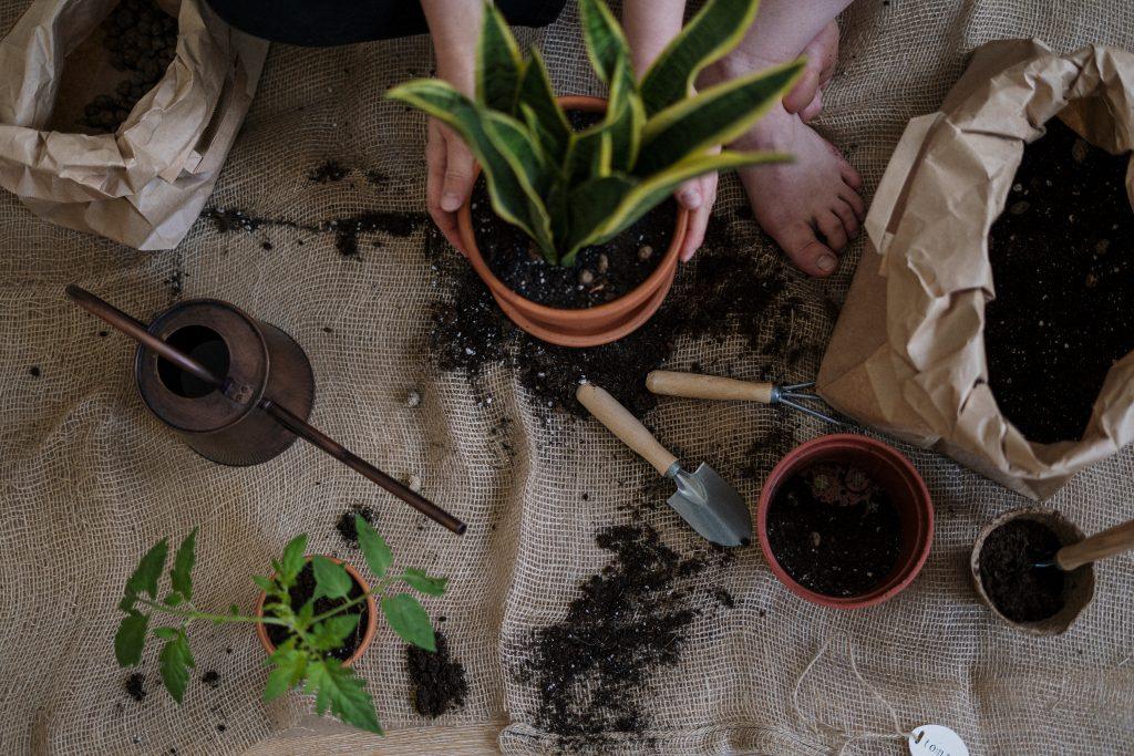 Overhead photo of gardener potting plants