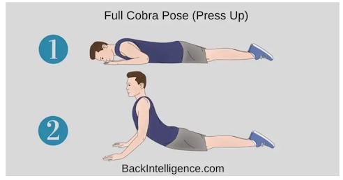 full cobra post infographic