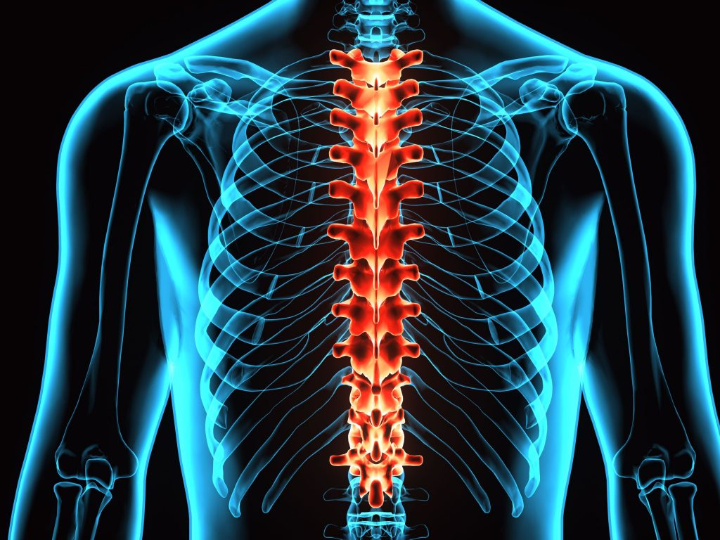 animated image highlighting location of the thoracic spine